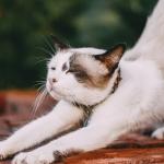 stretchen als een kat